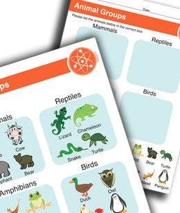 Animal Groups Printable