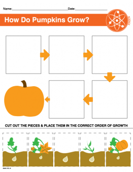 Pumpkin Growth Printable