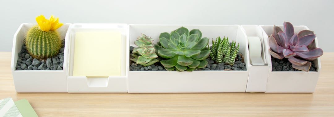 How to Plant Succulents in Your Konnect System