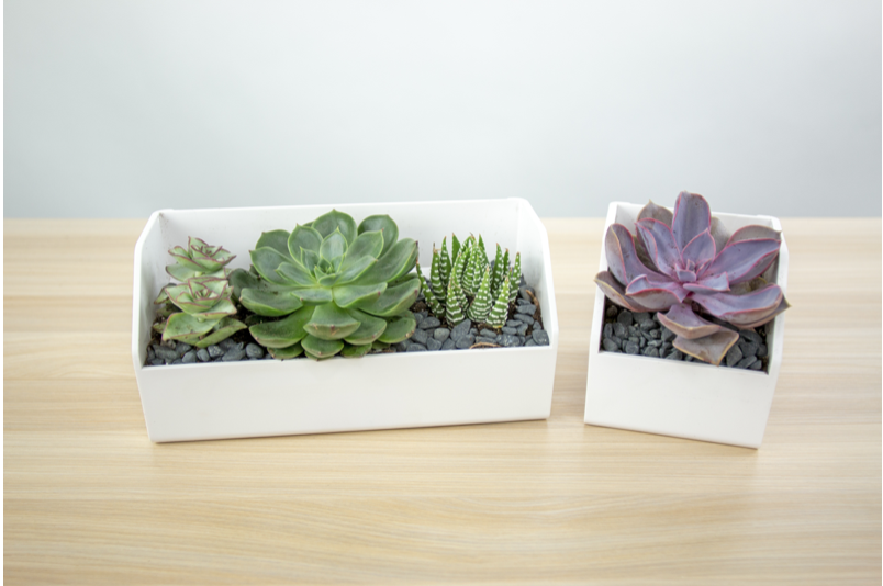 multiple succulents in konnect